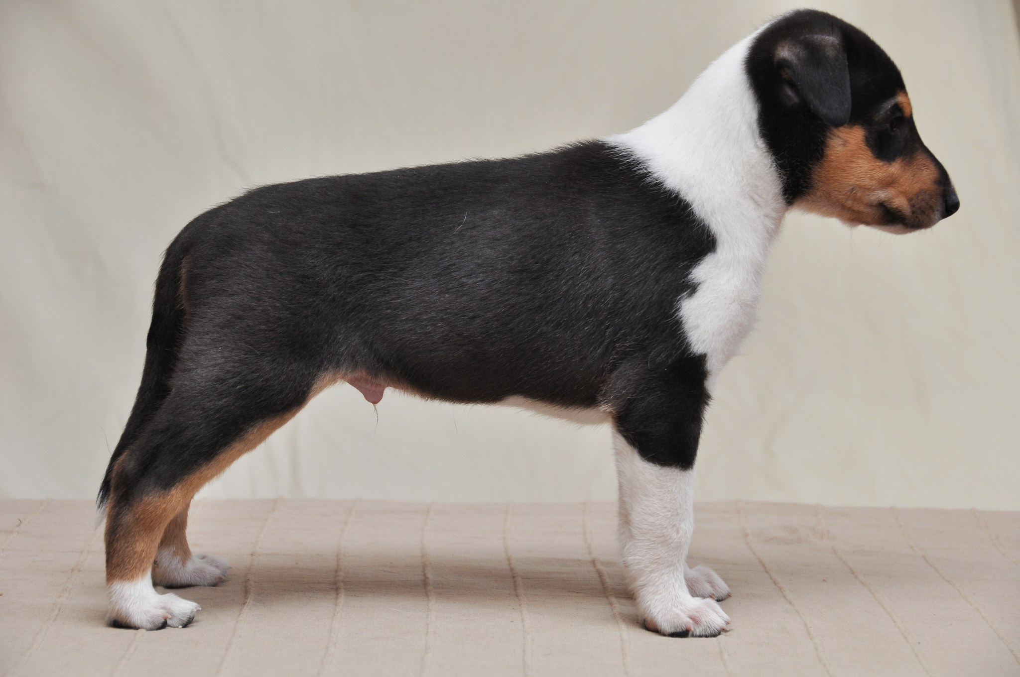Pentuja puppies - Www nice pic other ...